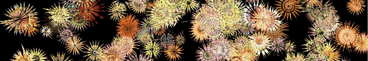 1200x200 3 flowers